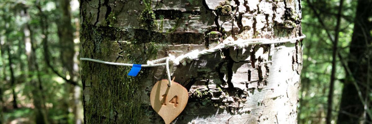 Dernières pistes: la forêt, les autres vivants et les morts….