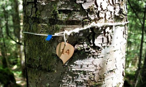 Dernières pistes: la forêt, les autres vivants et les morts....